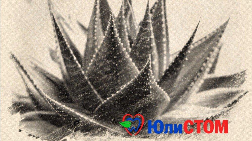 Алоэ вера - универсальное лечебное растение