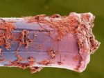 Зубная щетка: уход и дезинфекция