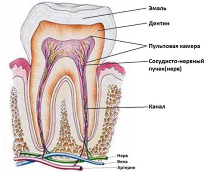 Зубной нерв в зубе