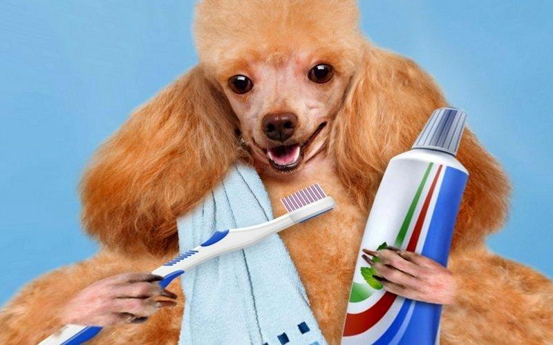 Стоматология у собак